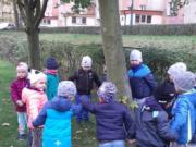 dzien-drzewa-1